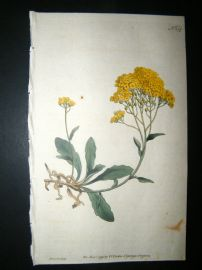 Curtis 1791 Hand Col Botanical Print. Yellow Alyssum 159